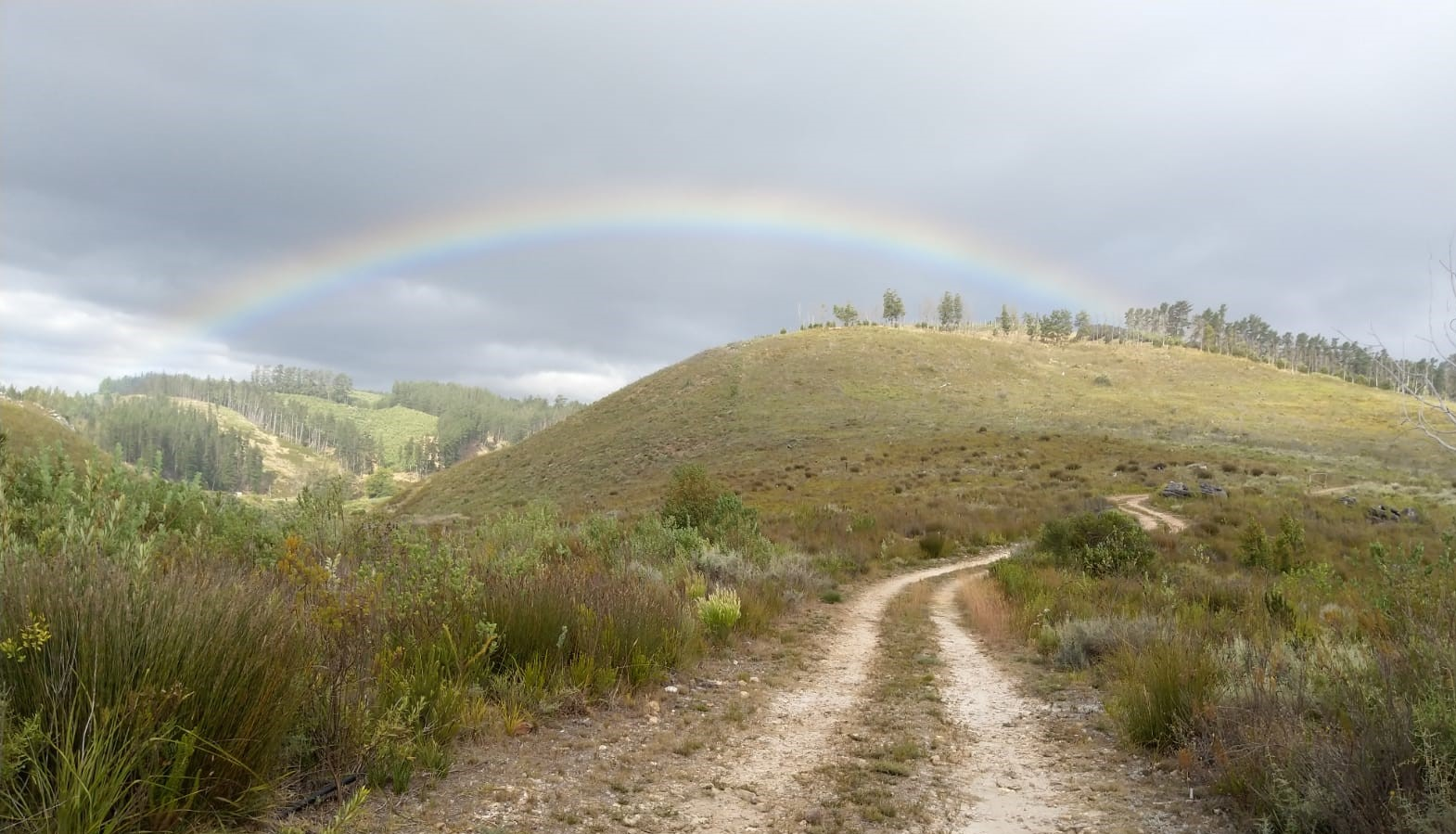 dirt road disappearing into natural fynbos with cloudy sky and faint rainbow
