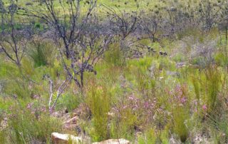 Basic functions returning: new growth amid dead branches