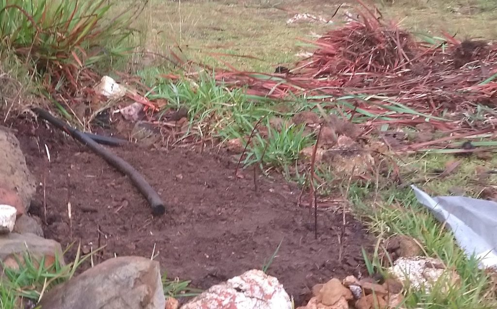 Seed bed cleared in wild land with vegetable seeds planted