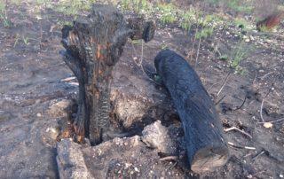 Impact of ED like a burned off stump